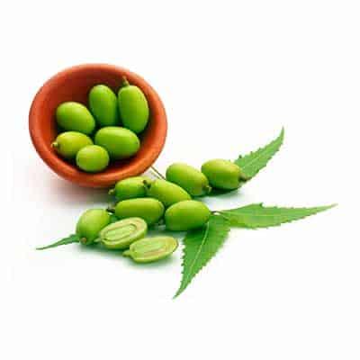 El neem es uno de los ingredientes del repelente natural de insectos Selva Maya